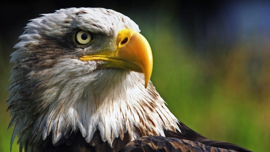 eagle-eye-898x505.jpg