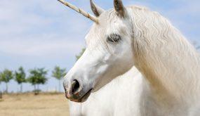 tech unicorn